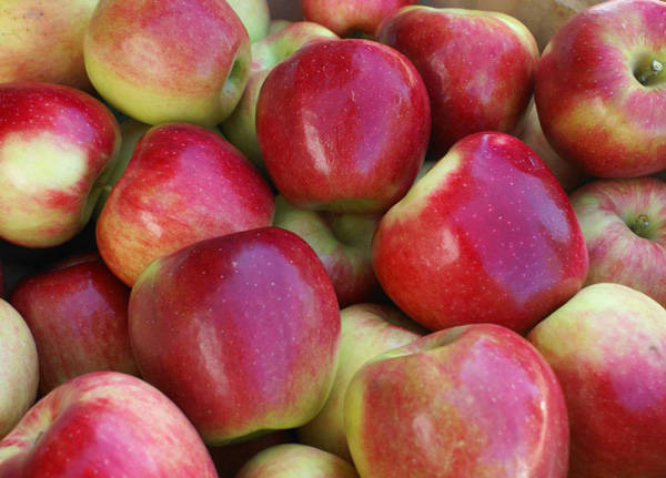 Fall Harvest, Corey Lake Orchard
