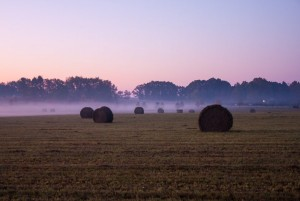 slider-chad-ely-foggy-field-straw