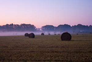 slider-chad-ely-foggy-field-straw